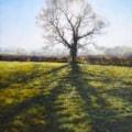 Backlit oak 45 cms x 35 cms