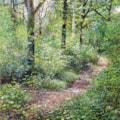 Badby woods study