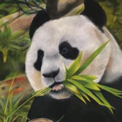 Bamboo - WEB