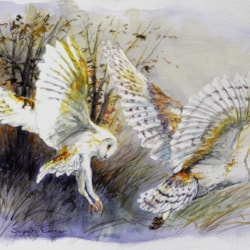 Barn Owls in flight watercolour sketch - Copy (640x461)
