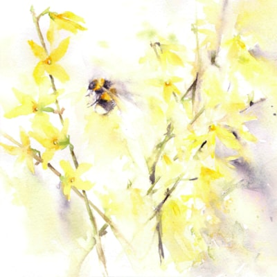Bee on Forsythia