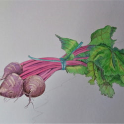 Beetroot Bunch 1