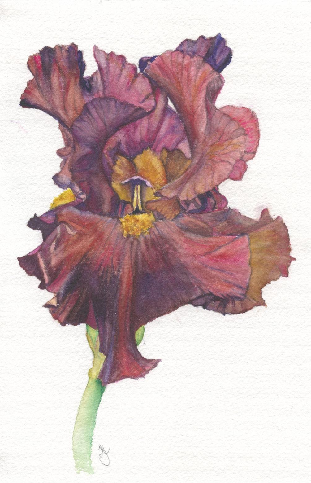 Billy Showell Brown Iris