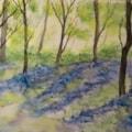 Bluebell Spring Woods 72dpi