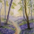 Bluebell Wood June 20 650px