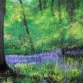 Bluebell Wood_edited-1 copy