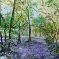 Bluebells in Wain Wood 2