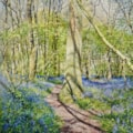 Bluebells, path and shadows