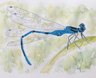 Blue dragonfly IMG_2672