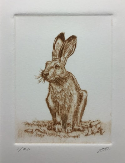Brown hare II by Margaret Mallows