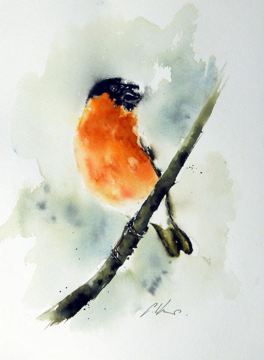 Bullfinch, watercolour by Graham Kemp.
