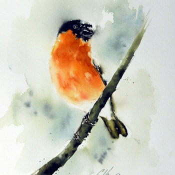Bullfinch, watercolour by Graham Kemp.