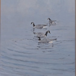 Canadian Geese (2)