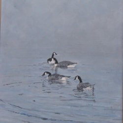 Canadian Geese (3)