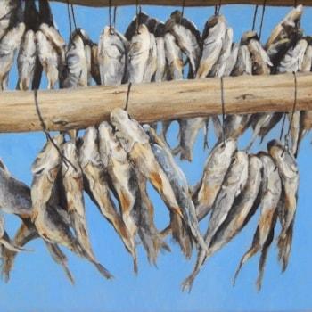 Cape herring
