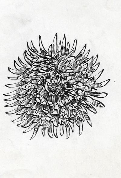 Chrysanth 1965