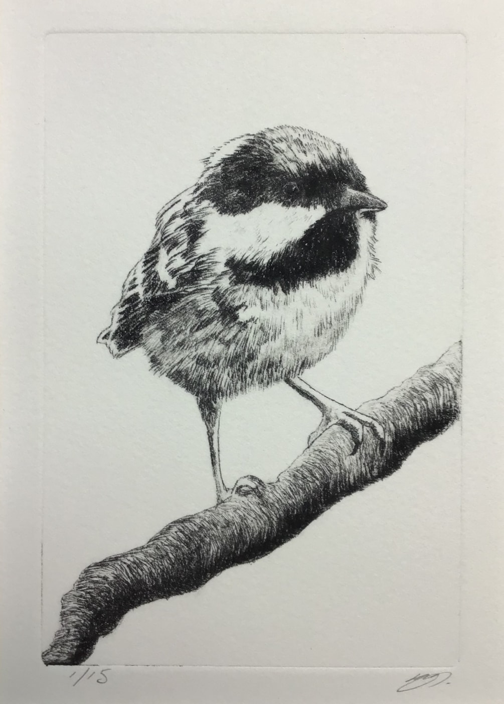 Coal tit by Margaret Mallows