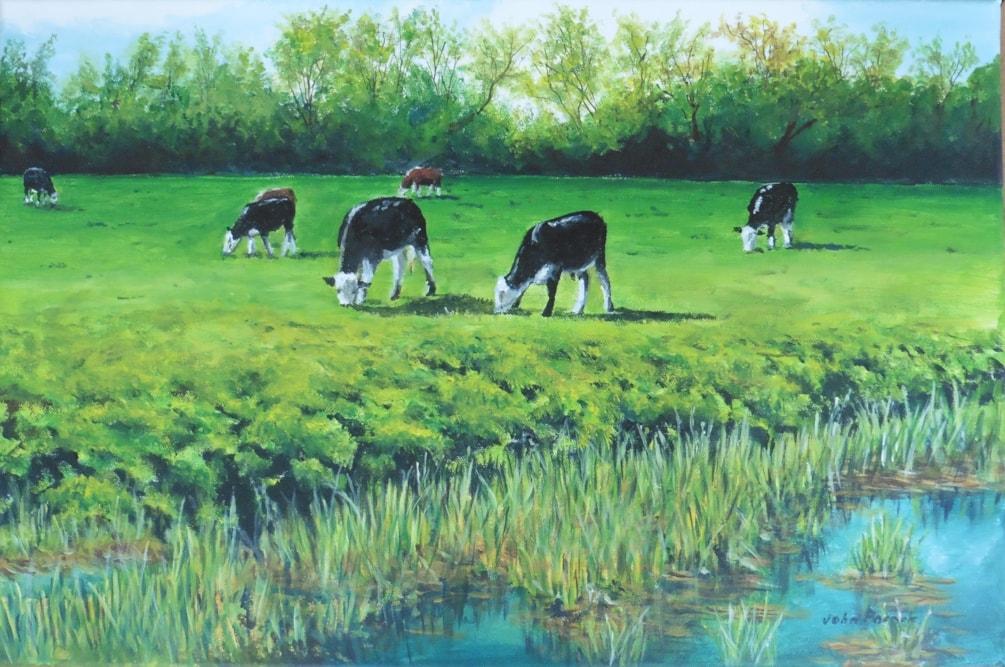 Coe Fen Cattle