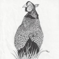 Colonel Pheasant