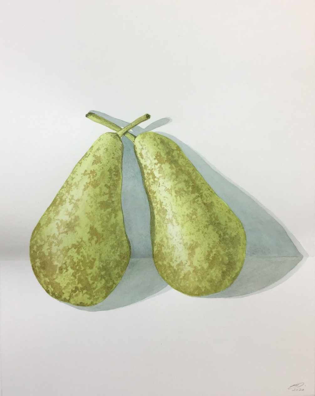 Commission - A pair of pears by Margaret Mallows