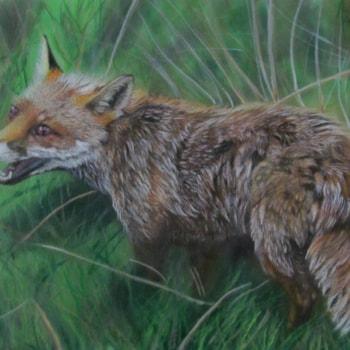 Countryside Fox