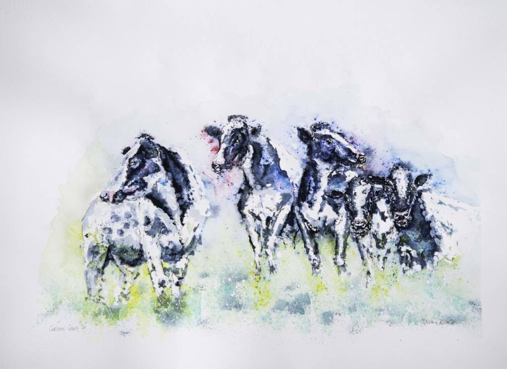 Curious Cows '20-1