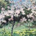 Daffodils and Blossom