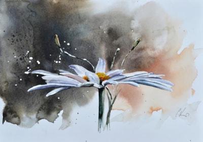Daisy, watercolour painting by Graham Kemp