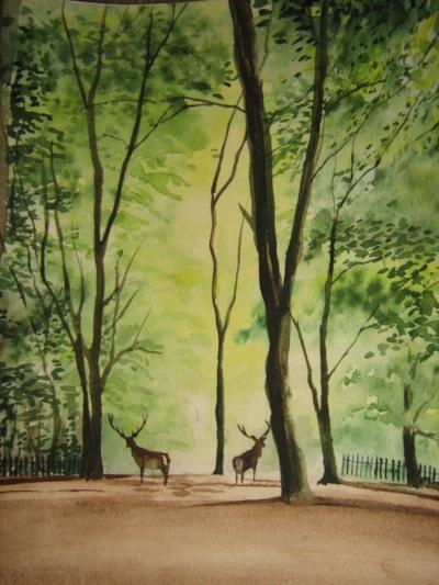 Deer in woodland image only (2)