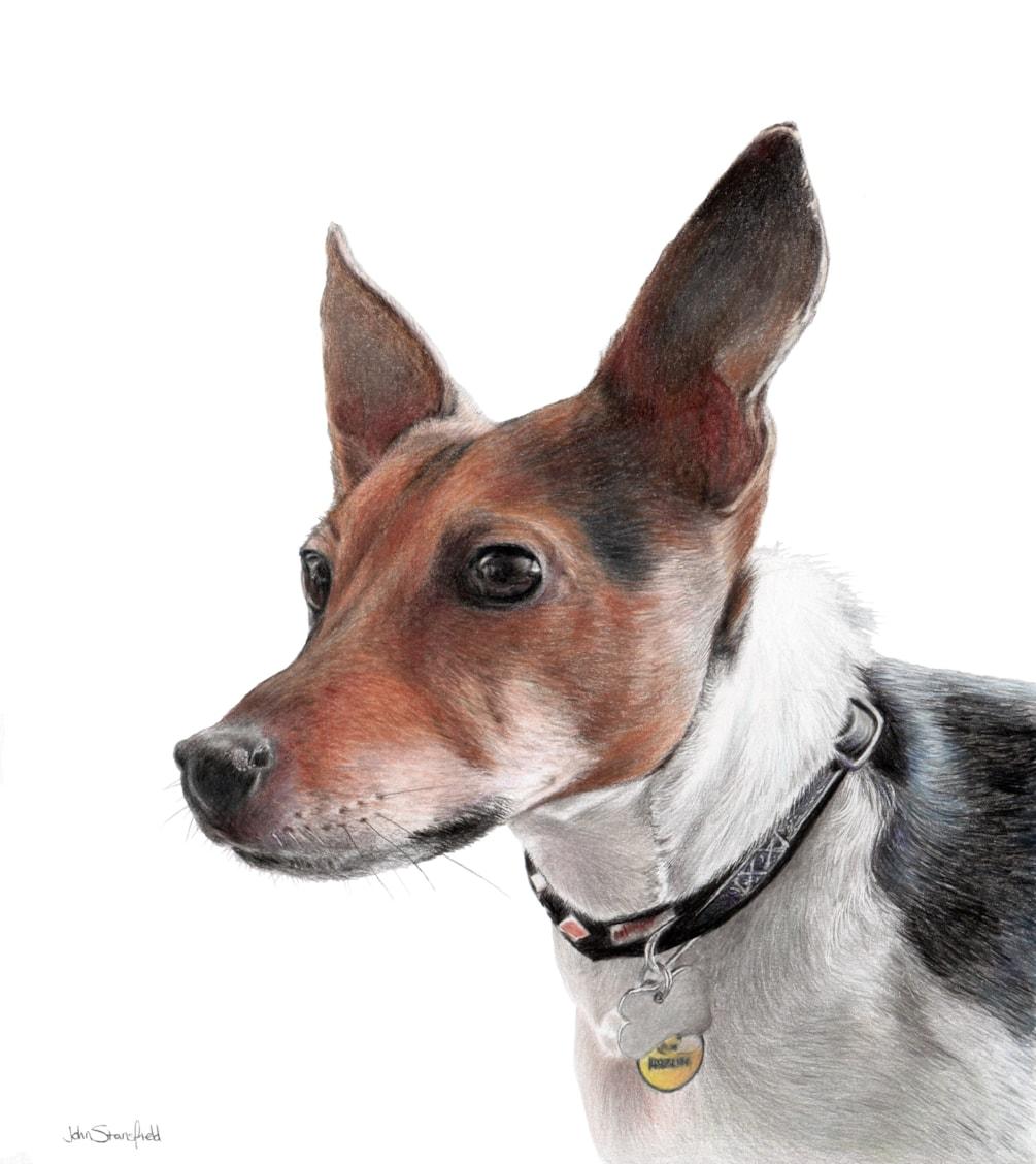 Dennis the Dog1
