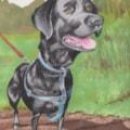 Dog portrait 001