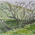 Dovedale trees