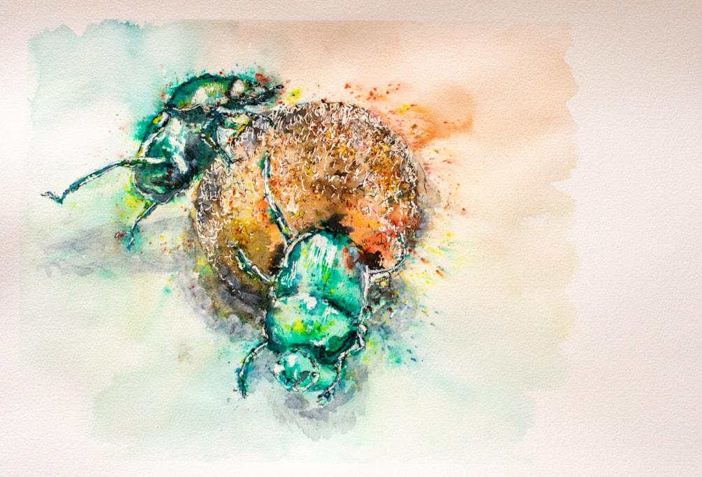 Dung Beetles '21 (2)