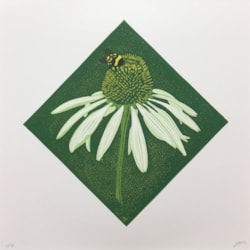 Echinacea White swan by Margaret Mallows