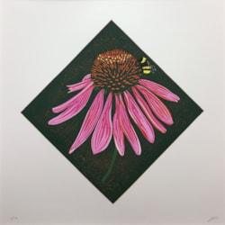 Echinacea purpurea by Margaret Mallows
