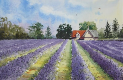 Edge of the Lavender Field