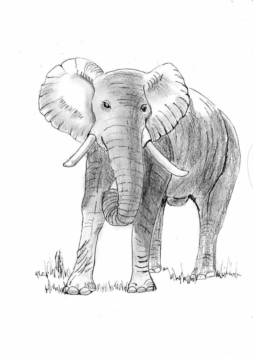 Elephant (4)