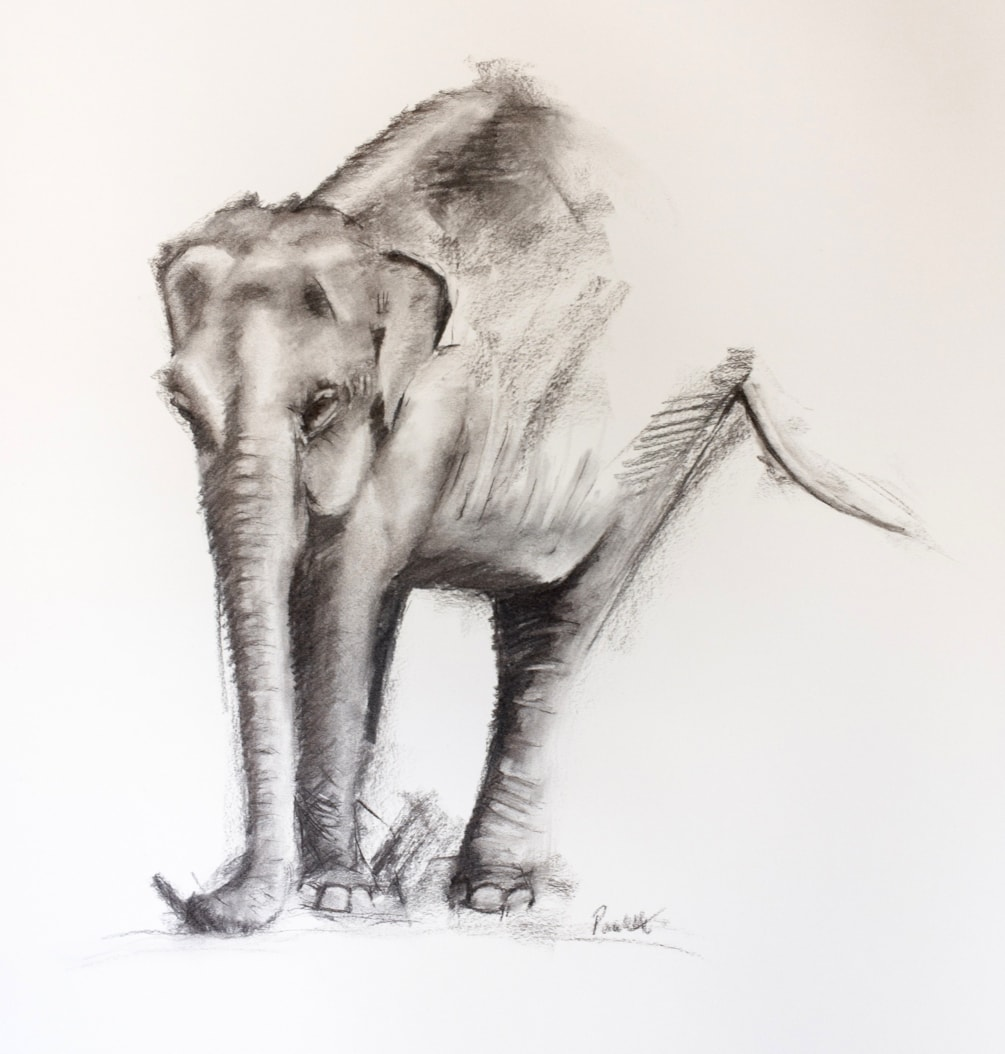 Elephant Study (2)