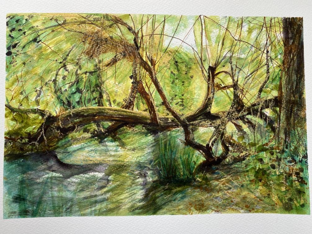 Fallen Willow Summer