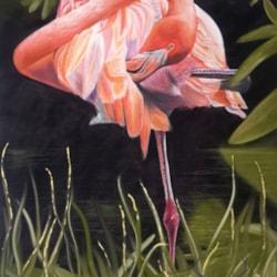 Flamingo - Stock Image Web