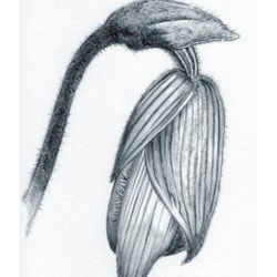 Flowerhead A4