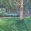 Fran Russell Birch tree shadows by the potting shed (1)