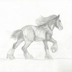 Galloping Major (April 2020)