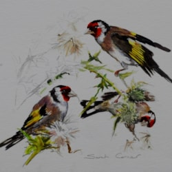 Goldfinches on Thistle watercolour sketch - Copy (640x547)