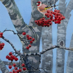 Goldfinch on Rowan