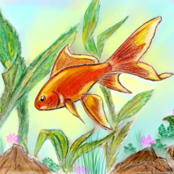 Goldfish color 001