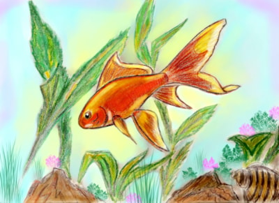 Goldfish color 001