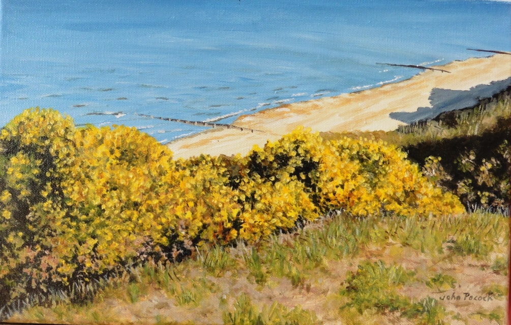 Gorse on the cliff