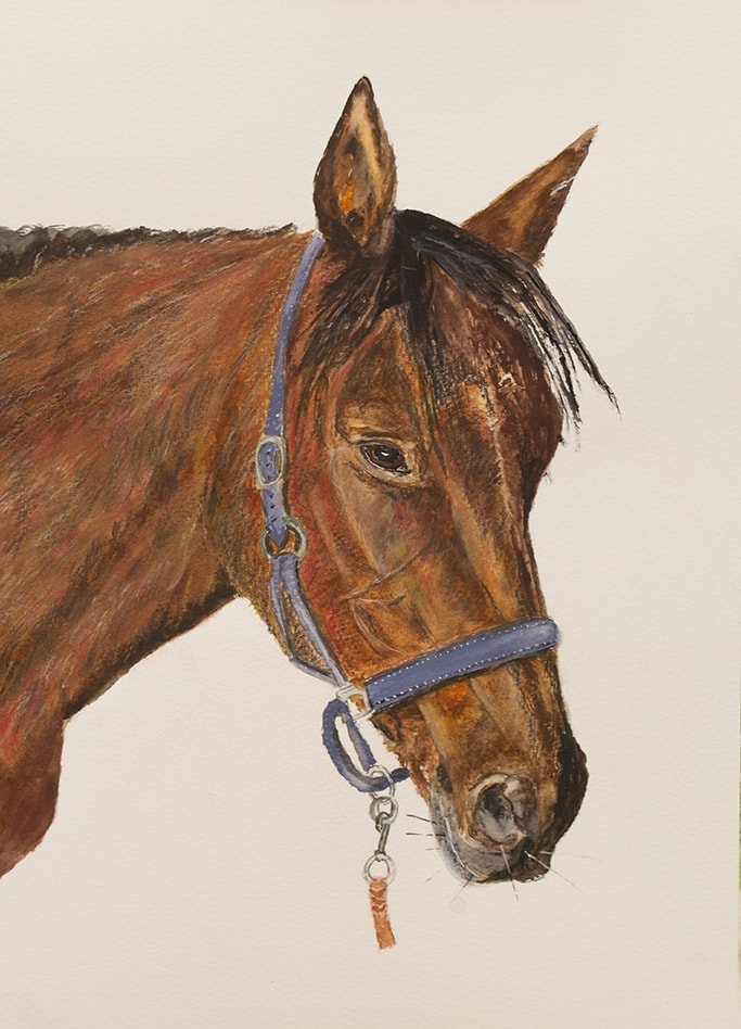 Hannah's Horse 72dpi