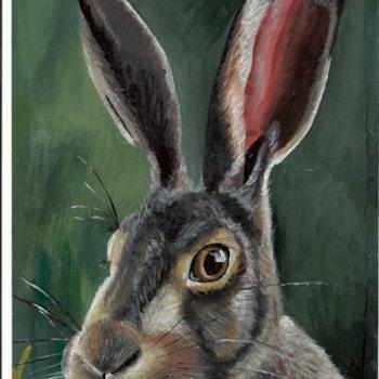 Hare - 11.04.20